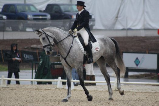 Cantering 20 by SoloPianoStock