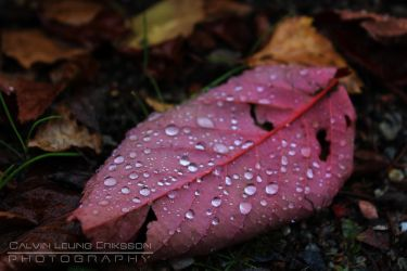 Pink Drops by cleriksson