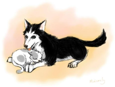 Cat and Dog by minicooly