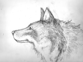 Young Wolf by Ghiest1