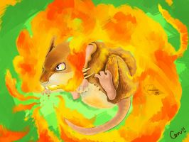 Raticate flame wheel