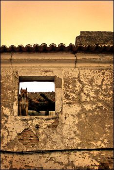 Dog at the Window by fGimbra