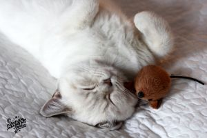 .:Cat sleeping with mouse:. by niekje-chan