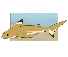 Botanica Zoo || Blacktip Shark || Sabastian by LadyPipen