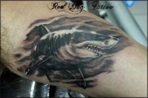 Shark Tattoo by Reddogtattoo
