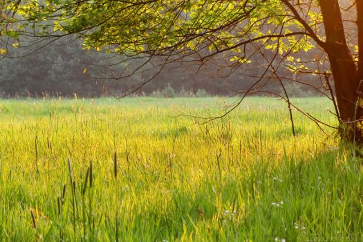 Lay on a field of green by rosaarvensis