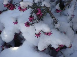 Under the snow by Fairling