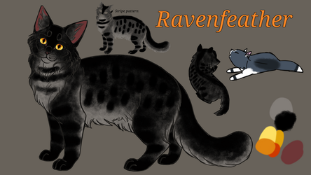 Ravenfeather 2018 Reference by RavenfeatherOfRC