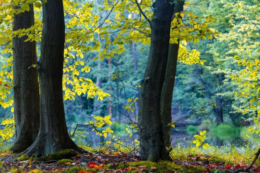 forest by marrciano