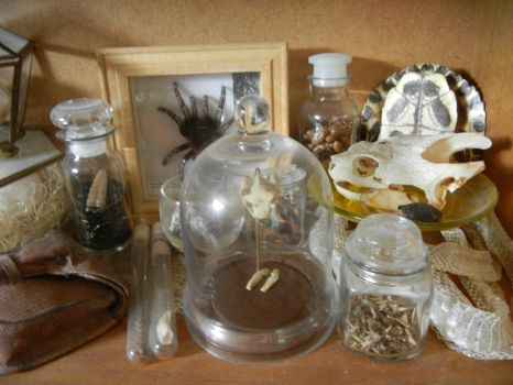 Reptile Amphibian insect etc shelf pt 2 by modastrid