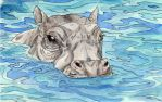 The Hippo by WendigoIllustration