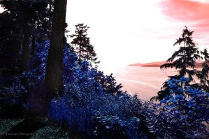 Blue Vancouver by pendragon93