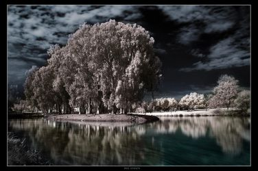 Tree Station by gilad