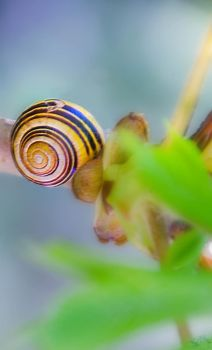 Snail by bulgphoto