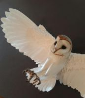 Before and after, paper mini barn owl by ZackMclaughlin on ...