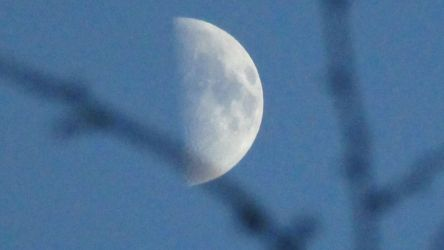 Moon in focus, branches not in focus by BryceMigliore
