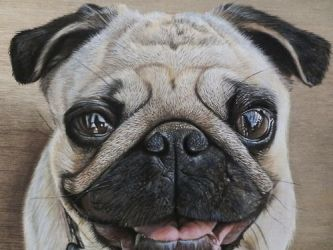 Detail Of Pug drawing by ivanhooart