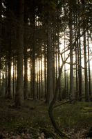 Forest at sunset 10 by mprangenberg