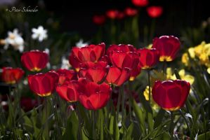 Spring red (II). by Phototubby