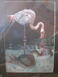 Pink Flamingo reflection by pescare