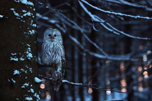 Owl at night by Konakira
