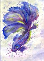 Fighting Fish by MarcHorn