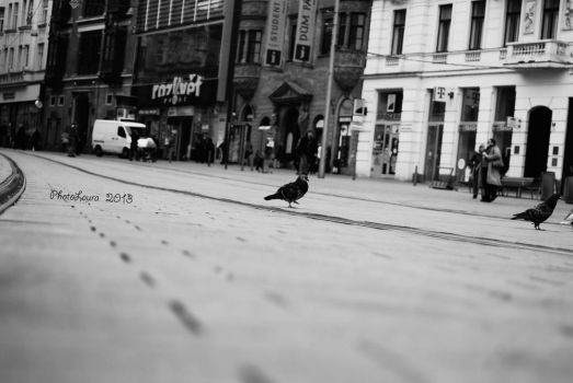 Pigeon on the rail by PhotoLaura