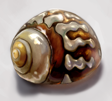 Shell Luster Study by charfade