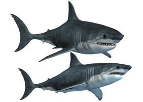 Sharks-2 PNG Stock by Roy3D