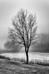 A Tree in Fog by redwolf518