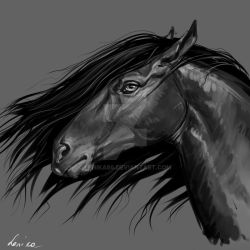 horse portrait 6 by Lenika86