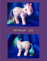 TAF Parasol by NorthernElf