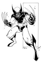 Wolverine by luisalonso