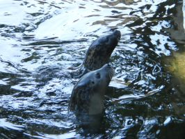 Hungry Seals by tinuvielluthien