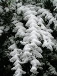 heavy snow on light leaves by blackpixifotos