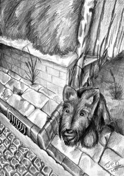 Terrier In The Street by nunt