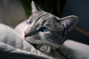 Cat session #2 by Chalow