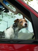 Stay away from MY car by doglover43