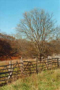 fenced tree by LilithParker