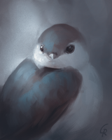 Another bird study by RobertoGatto
