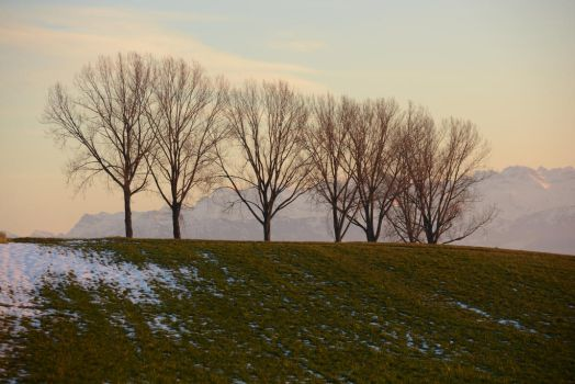 Trees and Field by SelvaStock