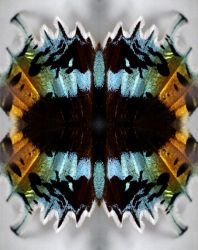 Butterfly manipulation by Stooball