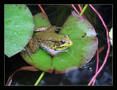 in the pond by pileto