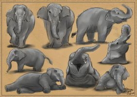Asian Elephant Study by Chayemor