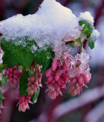 Pink and White II by Tanager