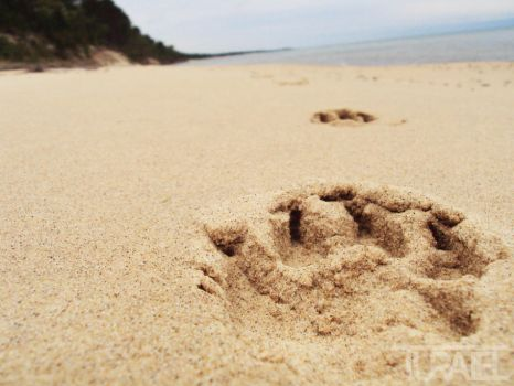 Paw Print in the Sand 4 by Turaiel