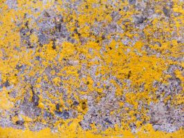 Yellow Concrete 5 by Artfans