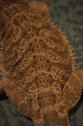 Lizard Scales Texture 3 by bdragon-stocks