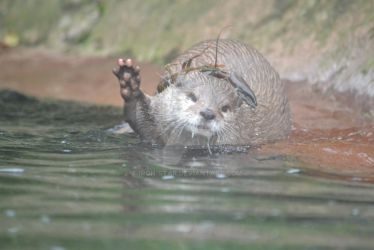 Otter hi-five! by Iron-Star