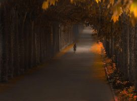 The walls by LonelyPierot